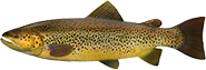 Brown Trout Fishing on Lake Michigan