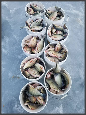 White Bass Ice Fishing on Lake Winnebago